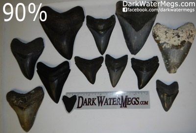 High Quality Wholesale Megalodon Teeth